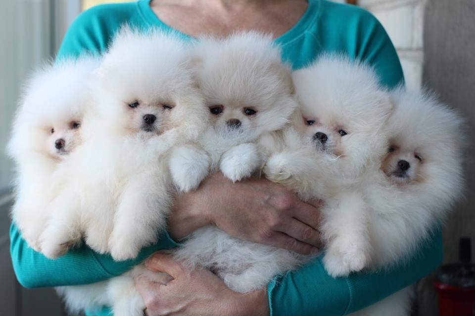 2 мес 5 щенков
